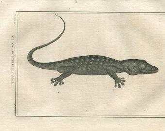 1802 Gecko Antique Print, Buffon, Lizard Drawing by De Seve, Engraved by Tardieu, Reptiles