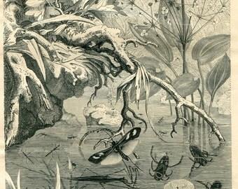 Vintage Print German Water Bugs Brehms Tierleben 1920s Black and White Entomology Illustration