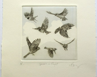 Sparrows in Flight. Fine art drypoint etching.
