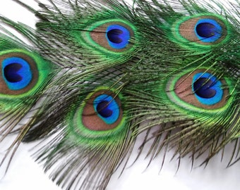 BBF(Before Black Friday) Peacock Feathers,Seven All Seeing Eye Feathers,Eyes Measure 2x2.5 in,18in in Length,Weddings,Prom.Shower,Center Pie