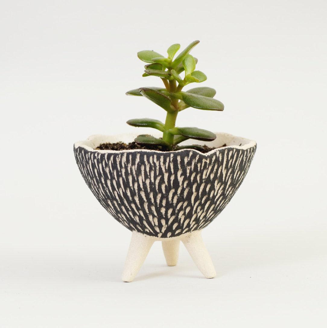 black and white pottery planter textured ceramics ceramic - 🔎zoom