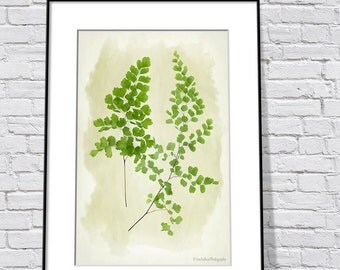 Botanical Print - Fern Art Print - Nature Print - Green Wall Art Print - Woodland Art - Maidenhair Fern Art Print - Monochromatic Print