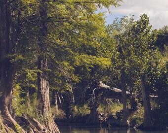 Texas photography, texas decor, blanco river, cypress trees, texas hillcountry, texas art, texas home, hillcountry art,  large wall art,