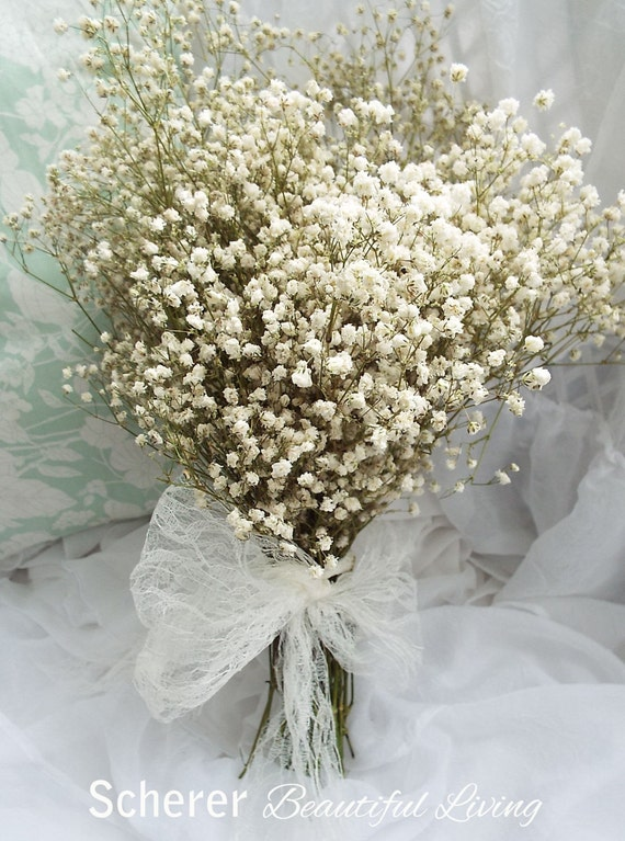 Baby S Breath Dried Gypsophila Babys Wedding Bundle