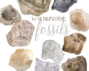 Watercolor Fossils Clipart, Fossil clip art, Fossils clip art, Fossil clipart, prehistoric illustration, Science artwork, Teacher clipart