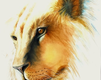 "Lion in the Sun watercolor 11 X 11"" print"