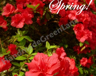 Photography, Azalea, Hello there Spring, Typography, instant download, nature, flowers, blooms, red