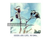 Seeds Are Life. No GMOs. Rose seed pods in winter ice. wall art, poster, DIY, digital download, gift, nature, photograpy