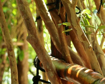 Nature Photography - bamboo wall detail