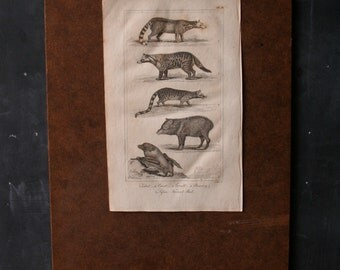 Original Antique Animal Engraving Print From 1800s Five ANimals From Nowvintage on Etsy