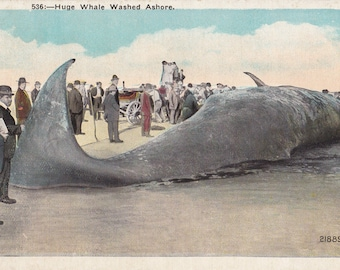 Huge Whale Washed Ashore- 1920s Antique Postcard- Beached Whale- Weird Postcard- Beach Souvenir- W H Bechtel- Paper Ephemera