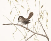 Bewick's Wren (Limited Edition Print)