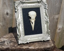 Baroque framed crow skulls