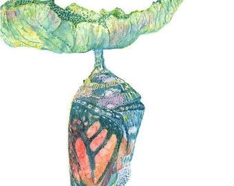 Butterfly Chrysalis-Watercolor Painting Art Print