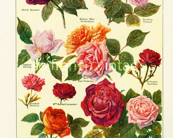 1922 OLD GARDEN ROSES. Antique Flower print. Roses Lithograph. Botanical wall art. Flower decor.  French vintage illustration Larousse