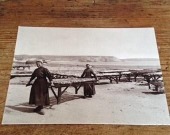 French Sepia Postcard -  Douarnenez Sardines