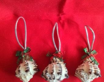 Murex Shell Ornament, Murex Shell, Coastal Decor, Seashell Christmas Ornament, Nautical Decor, Beach Wedding Favors