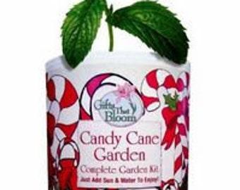 Candy Cane Garden Kit