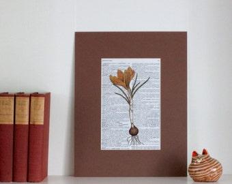 Print, Crocus Botanical Print, Dictionary Print & Mat, Art Print, Dictionary Print, Dictionary Art Print, Flower Print, Dictionary Page