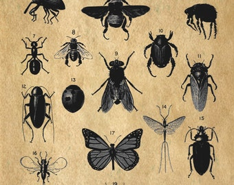 INSECT study bugs science entomology art print custom choice background from antique paper IS100