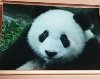 Panda Bear Jumbo Acrylic Fridge Magnet