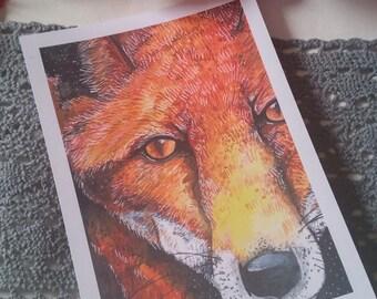 The fox 5x7 art print.