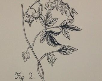 Bleeding Hearts: Botanical Silkscreen Print