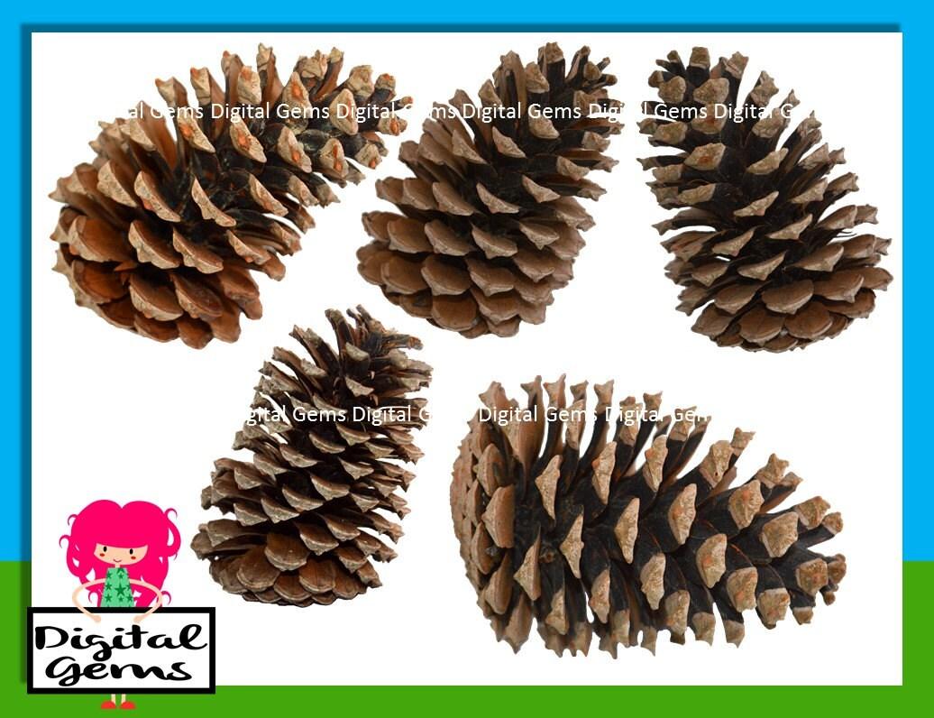 christmas pine cone drawing - photo #13