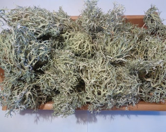 Dried Lichen-Natural Crafts-Organic-Eco-Terrarium