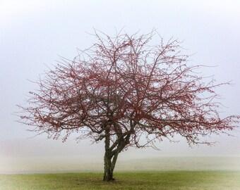 Crabapple Tree in Winter Canvas Gallery Wrap