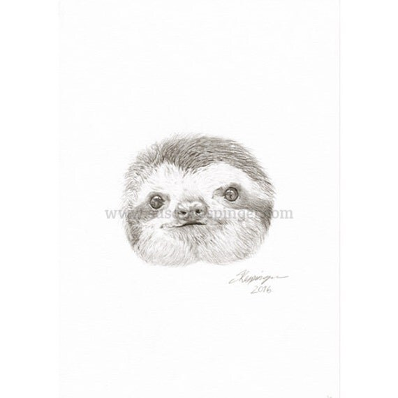 how to draw a sloth head