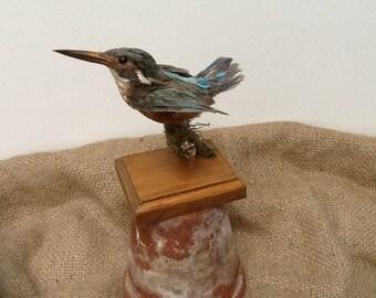 Adrian the kingfisher taxidermy bird
