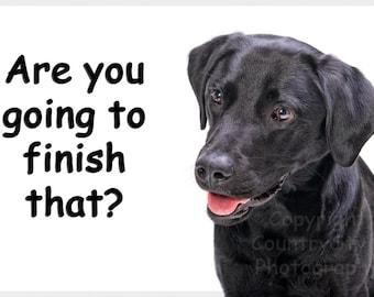 Black Labrador Funny Fridge Magnet Gift