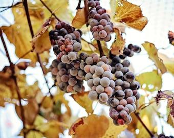 Winery Print Grapes Print Home Decor Prints & Canvas