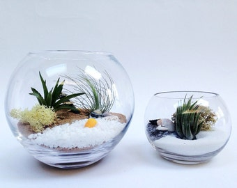 Medium Airplant Terrarium Fishbowl Kit with 2 Tillandsia Plants~ glass vase personalised gift wedding desk table centrepiece office planter