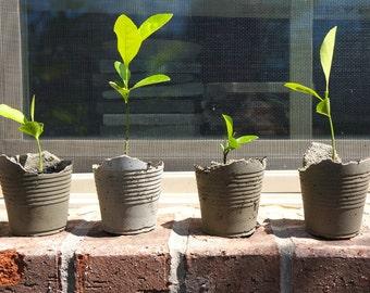 Concrete Handmade Mini Planters.