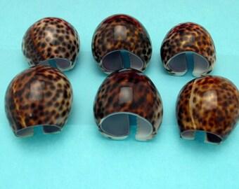Cowrie Shell napkin rings Set of 6 seashells