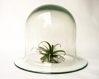 """Vintage Cloche Bell Shape Horticulture Glass Terrarium - Clear Blown Glass Dome Seedling Protector - Cover for Food/Display Objects 7""""x 8.5"""""""