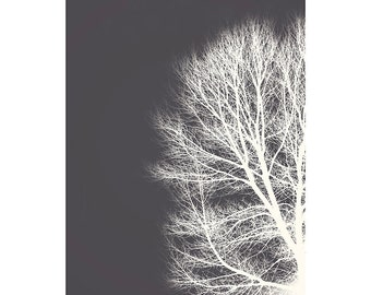 Nature Photography PRINT, White Branches - 1, Wall Art