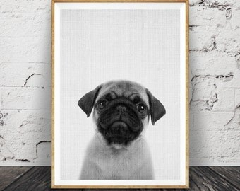 Pug Print, Puppy Dog Wall Art, Black and White Photo, Printable Poster, Digital Download, Kids Room, Nursery Animal Decor, Modern Minimalist