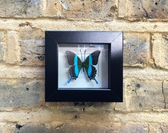BUTTERFLY  MINIATURES  VII -  Handcrafted 2D print mounted inside picture frame
