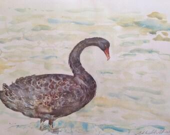 Black Swan near lake