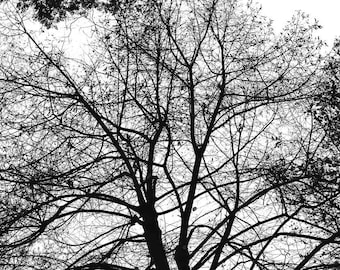 Stock Photography - Stock Photo - Stock Image - Instant Download - Winter - Bare Branches - Black and White