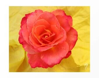 """Yellow Wall Art of a Heart Shaped Rose, Flower Wall Art, Yellow Art Print, Yellow Home Decor, Gift for Friend, Yellow Art """"Peach Heart Rose"""""""