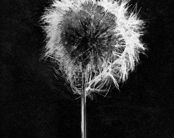Black & White Make a wish