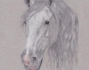 Andalusian Horse Portrait