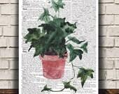 Watercolor print House plant art Plant poster Flower print RTA1739