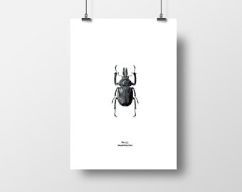 Beetle graphic print A4 (A3 also available)