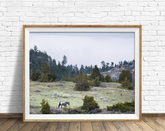 "landscape, woodland, nature, photography, instant download art, printable art, large art, large wall art, print - ""High Country Traveler"""