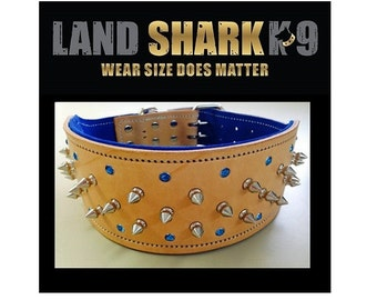 Natural and Royal Blue Studded Suede Leather Dog Collar with Blue Crystals and Nickel Fittings